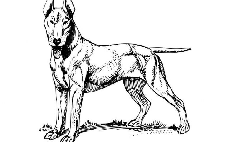 Los animales potencialmente peligrosos tienen obligación de solicitar licencia municipal