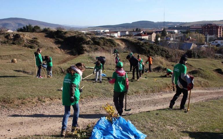 Organizada una nueva plantación de árboles autóctonos en Las Traídas