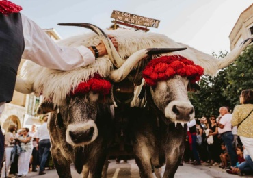 Nueva web municipal para impulsar la declaración del Día de Campoo como Fiesta de Interés Turístico Nacional